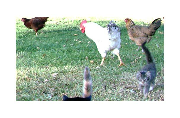 Image of Alpine Chicken, Foodista